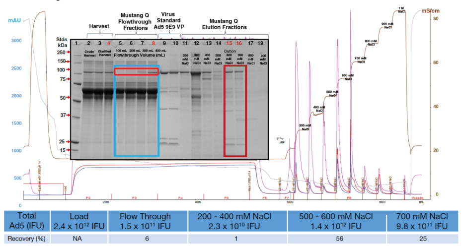 Chromatography profile for development scale run using Mustang Q membrane in bind/elute mode